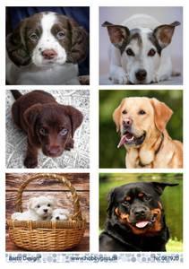 Bilde av Barto Design - Klippeark A4 - 067920 - Dogs