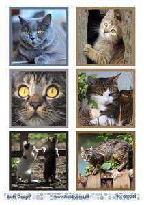 Bilde av Barto Design - Klippeark A4 - 069044 - Cats 2