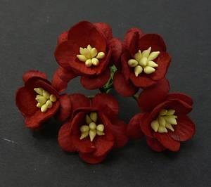 Bilde av Flowers - Cherry Blossom - Saa-048 - Deep Red - 50stk